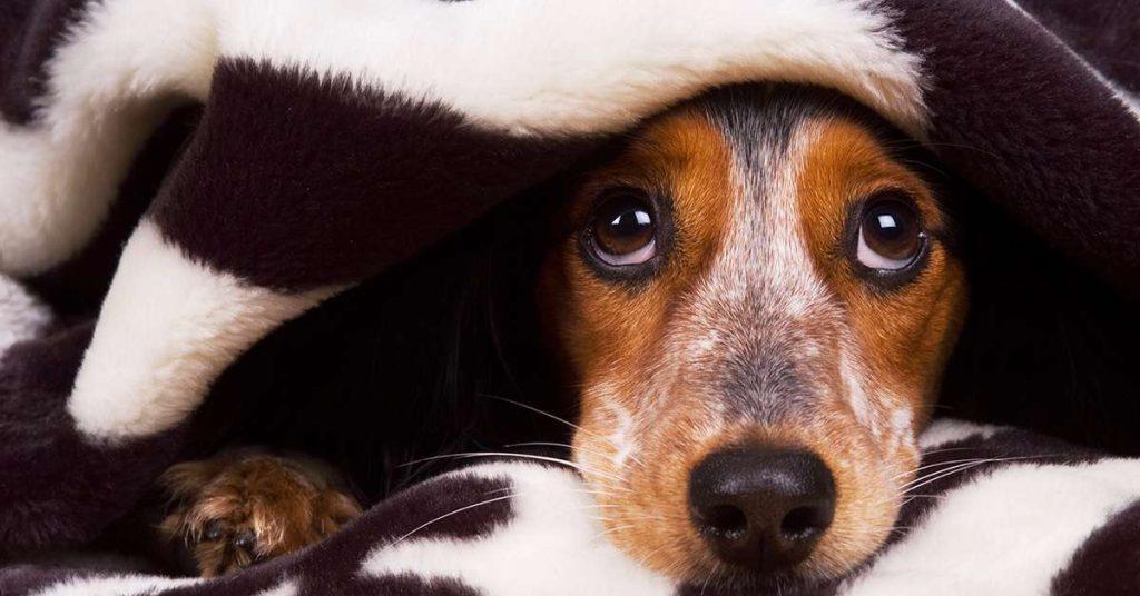 """Botti di Capodanno, il veterinario: """"Ecco come fare con gli animali"""""""