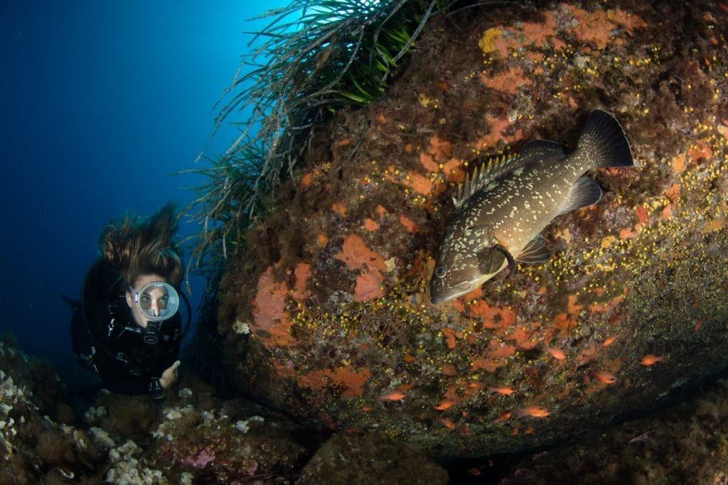 Santa, successo per il concorso dedicato alla foto subacquea