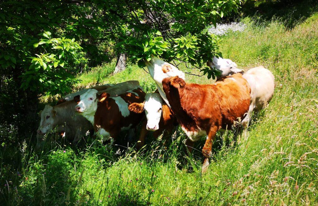 La Marpea al fior di latte, la campagna che scende in città